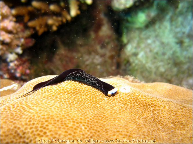 2-nudibranch-0816-m1-great-barrier-reef.jpg