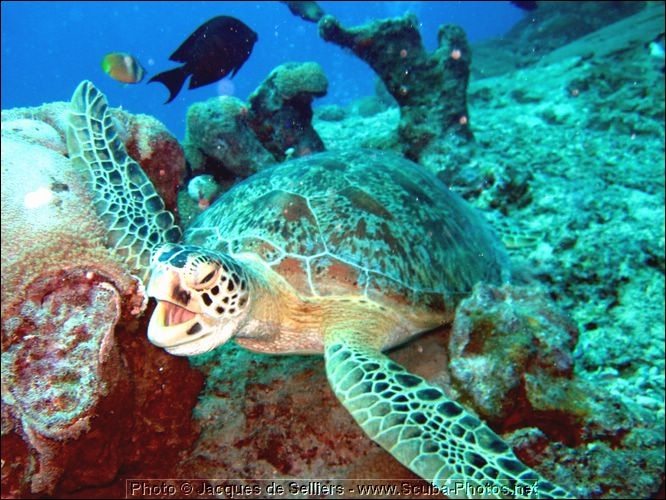 3-turtle-5040-m1-great-barrier-reef.jpg