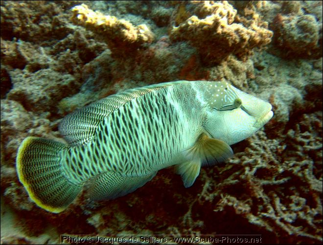 5--1084-c1m1-great-barrier-reef.jpg