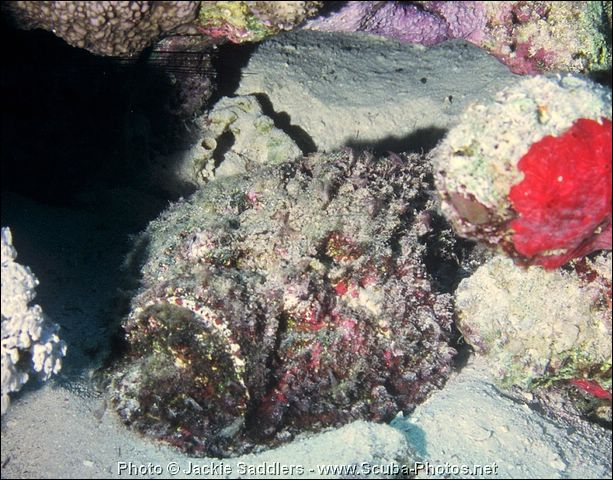 red-sea-1997-71-cr.jpg